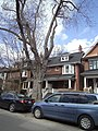 241 and 243 Albany Ave Annex Toronto.jpg