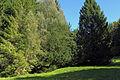 2 Eiben in Hirschenwies 01 2014-09 NÖ-Naturdenkmal GD-141.jpg