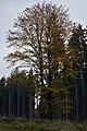 3226 Baum.jpg