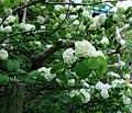 3 Chome Hase, Kamakura-shi, Kanagawa-ken 248-0016, Japan - panoramio - jetsun (7).jpg