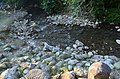 555594032Beitou Stone Nature Reserve, Taipei City+2411215+001 0217.jpg