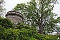 5 Original Olmsted Trees (28474899233).jpg