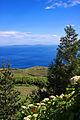 Açores 2010-07-19 (5046153671).jpg