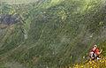 Açores 2010-07-23 (5160111663).jpg