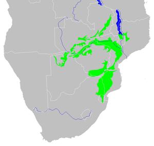 Zambezian and mopane woodlands - Map of the Zambezian and mopane woodlands