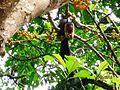 A Giant Squirrel.jpg