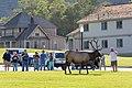 A crowd of people too close to a bull elk (44e2a686-47b6-4650-bc4f-ec37f3aa9b7d).jpg