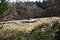A flock of sheep feeding on hay - geograph.org.uk - 1205491.jpg