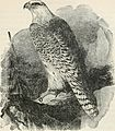 A popular handbook of the birds of the United States and Canada (1903) (14565534458).jpg