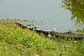 Abandoned Boat - Stream Ichamati - Purba Para - Baduria - North 24 Parganas 2015-04-11 7200.JPG