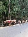 Addis Abeba-Collines d'Entoto (9).jpg
