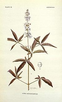 Addisonia (PLATE 018) (8574248657).jpg