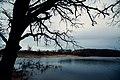 Albert Lea Lake in Spring - Myre-Big Island State Park, Minnesota (47926136481).jpg