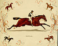Album of celebrated American and English running horses (Plate 9) (6012487858).jpg