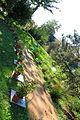 Allée des piments, Jardin Henri Gaussen (Toulouse) 2.JPG