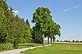Allee entlang der L 8201 bei Haslau 2014-05 ehm NÖ-Naturdenkmal GD-097.jpg