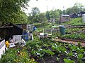 Allotments in Haworth - geograph.org.uk - 443408.jpg