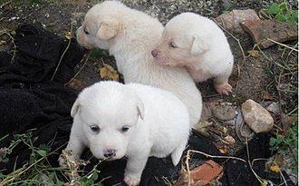 Street dog - Street dogs