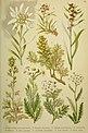 Alpen-Flora für Touristen und Pflanzenfreunde (1902) (17488844033).jpg