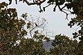 Alto Araguaia - State of Mato Grosso, Brazil - panoramio (1093).jpg