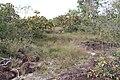 Alto Araguaia - State of Mato Grosso, Brazil - panoramio (1154).jpg