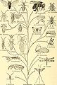Animal biology (1938) (17574001184).jpg