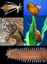 Diversos tipos de animales
