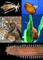 Animalia diversity.jpg