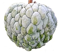 Annona squamosa (white background).jpg