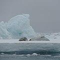Antarctica (40326130773).jpg