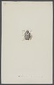 Anthrenus - Print - Iconographia Zoologica - Special Collections University of Amsterdam - UBAINV0274 001 03 0050.tif