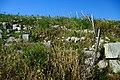 Apollonia di Sicilia 01.jpg