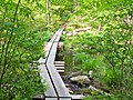 Appalachian Trail Boardwalk - panoramio.jpg