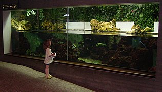Aquarium in der Wilhelma.jpg