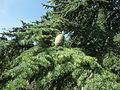 Arboretum Gaston Allard 6.JPG