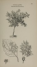 Arboretum et fruticetum britannicum, or - The trees and shrubs of Britain, native and foreign, hardy and half-hardy, pictorially and botanically delineated, and scientifically and popularly described (14597221850).jpg