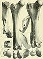 Archives du Mus©um d'histoire naturelle de Lyon (1878) (20318064162).jpg