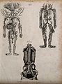 Arterial, venous and absorbent systems; three figures showin Wellcome V0008014.jpg