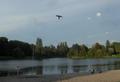 Attrappe Raubvogel 1.png