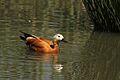 Austin Roberts Bird Sanctuary-012.jpg