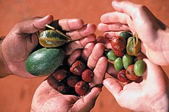 Two pairs of hands holding large assorted berries