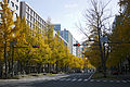 Autumn in Mido-suji Osaka02n.jpg