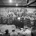 Autumn sale of Welsh Blacks at Dolgellau 1962 (10851418456).jpg