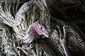 Avian influenza roee shpernik 08.jpg