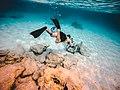 Bahamas Snorkel (Unsplash).jpg