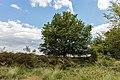 Balloërveld, natuurgebied in Drenthe 17.jpg