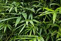 Bamboo Foliage (4507586865).jpg