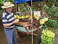 Banana Vendor - Near Viñales - Cuba (5289221987).jpg