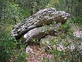 Barjac - dolmen n°3 (3).JPG