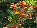 Bee and orange flower 8.jpg